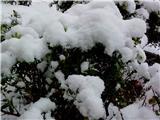 好大的雪啊!