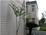 办公室前的小树