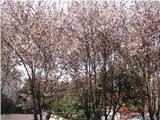 满眼尽是花团锦簇