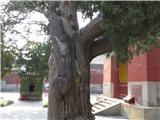 北京国子监和孔庙