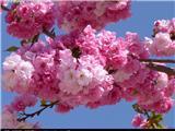 Redocn_2013121304554593