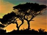 the_republic_of_cyprus-007