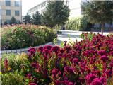 姹紫嫣红的校园花坛