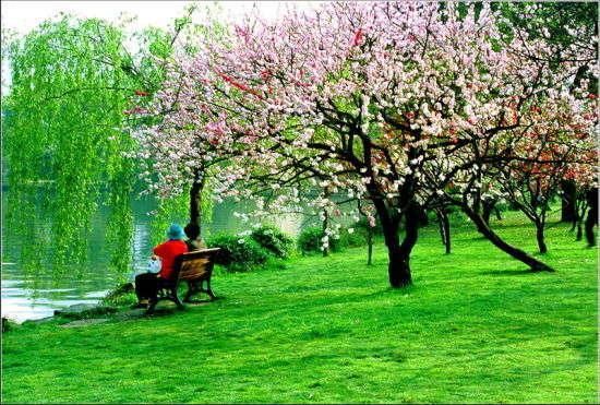 春天的景色_晋中师范高等专科学校附属学校一-晋中师范高等专科学校